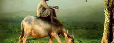Vaca asiática en relación a la fábula del TAO